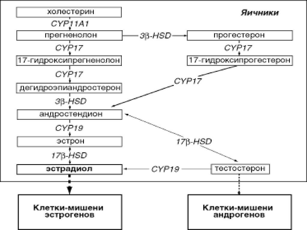 схема лечения ановуляции