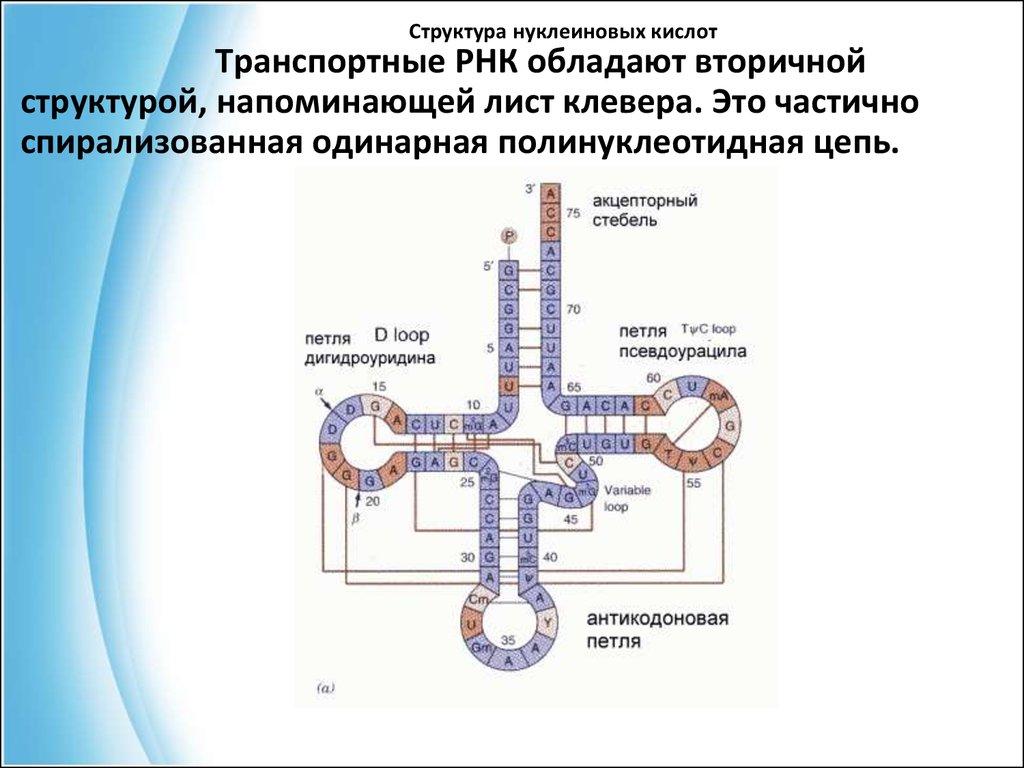 Пряники - рецепты с фото на Повар. ру (35 рецептов)
