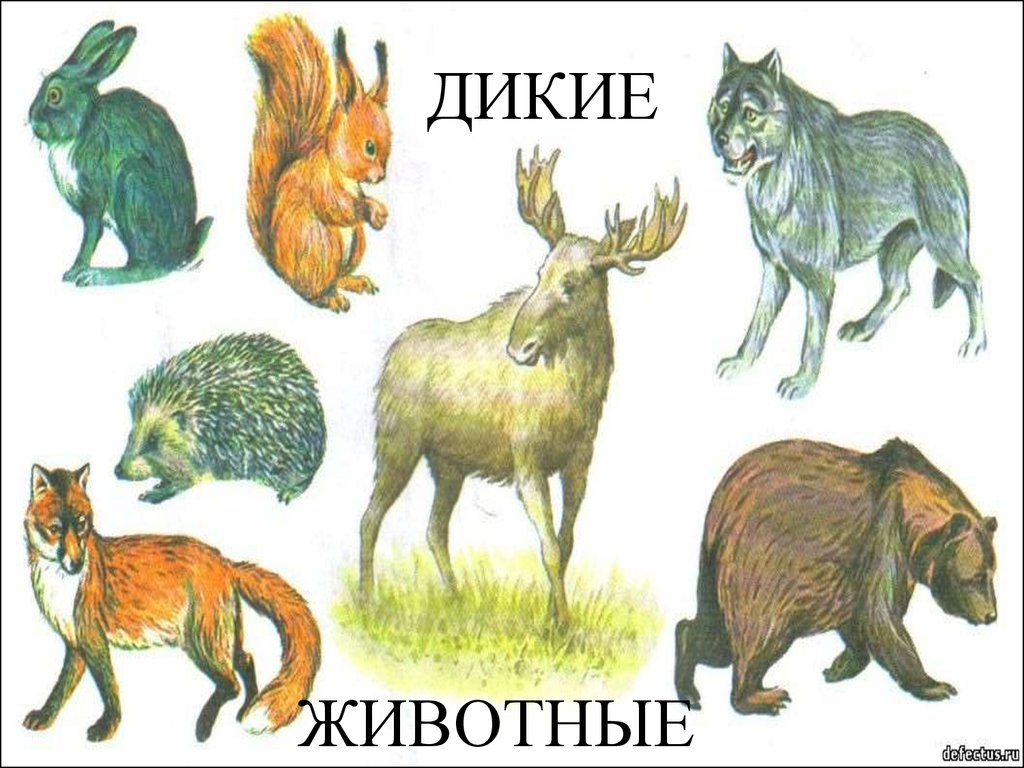 Лендинги животные 6 класс