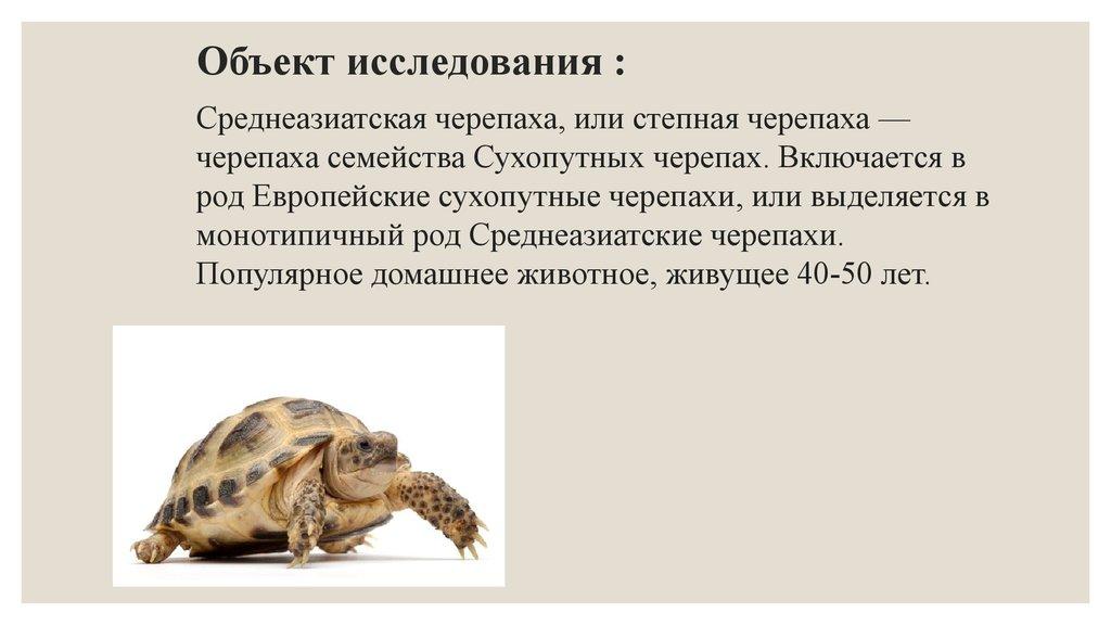 Среднеазиатские черепахи сухопутные в домашних условиях 80