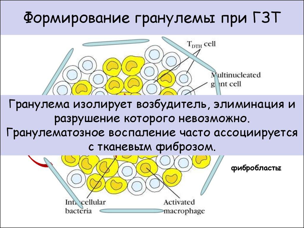 грибы паразиты у человека