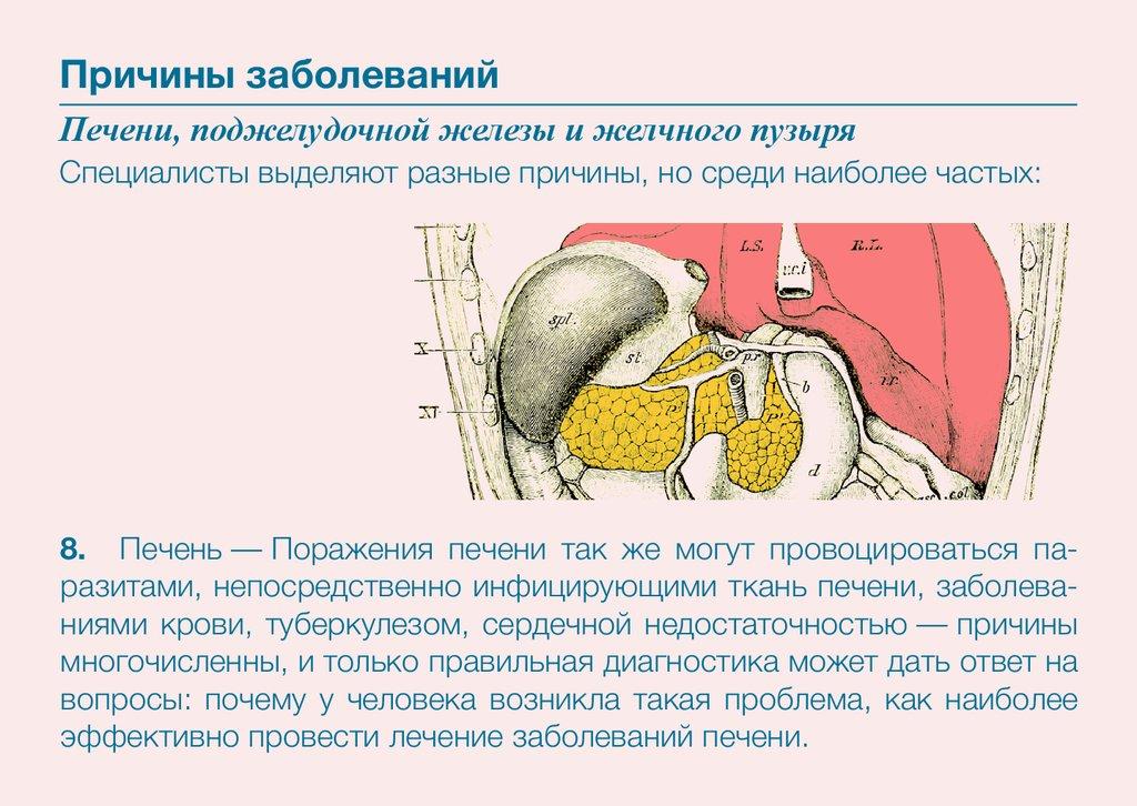профилактика очищения организма паразитов