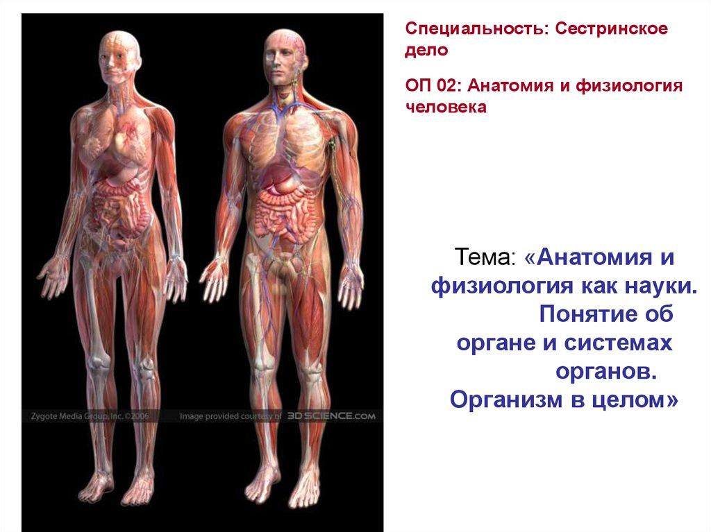 Анатомия Человека Самусев Селин