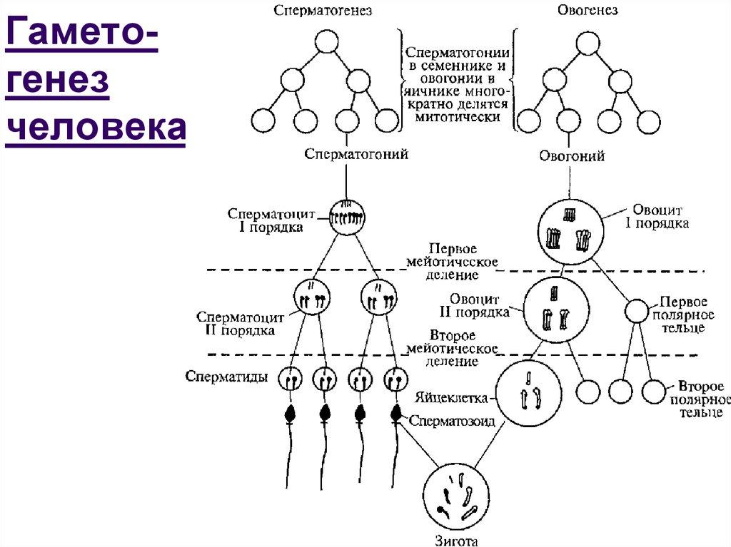 zhelezniy-chelovek-parodiya-dlya-vzroslih