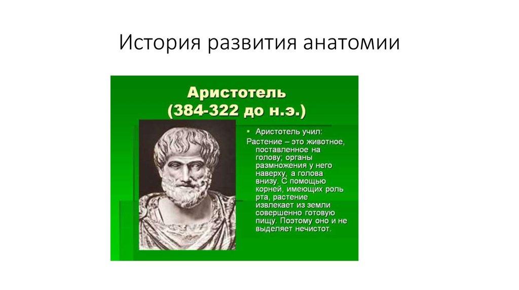 The history of anatomy