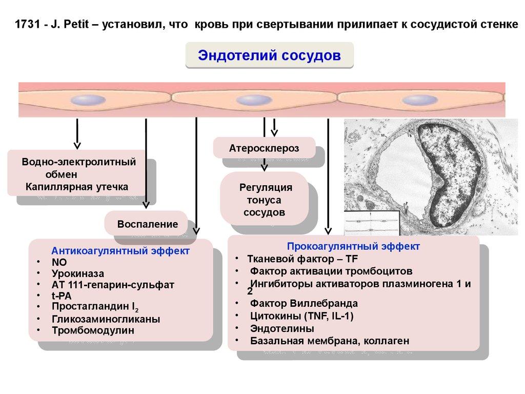 Лекарственные препараты выводящие холестерин