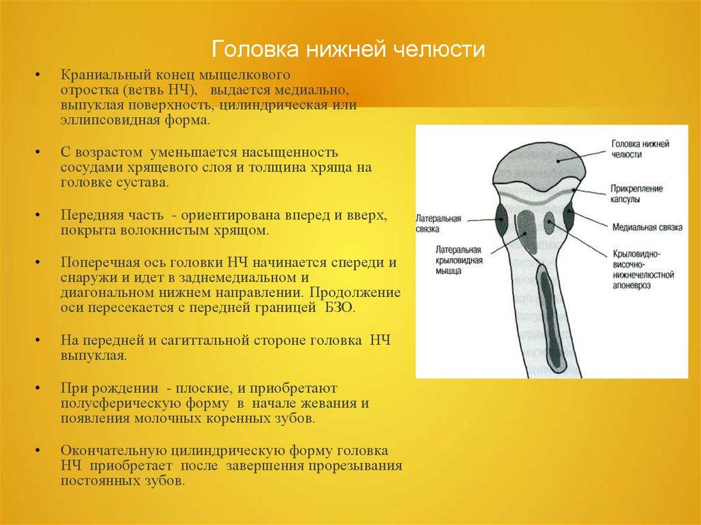 прикрепление капсулы височно нижнечелюстного сустава