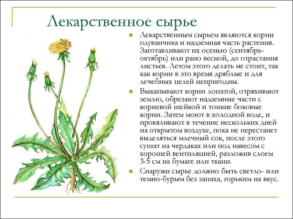 травы от паразитов мнение врачей