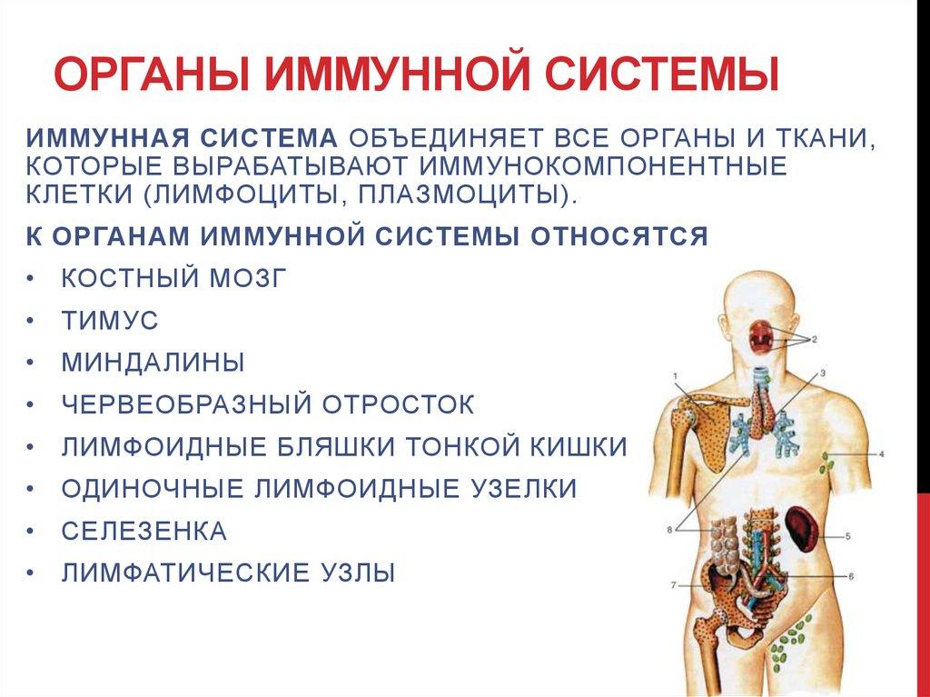 Все способы, как укреплять иммунитет взрослому.