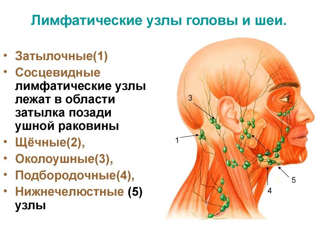 Как лечить воспалившиеся лимфатические узлы