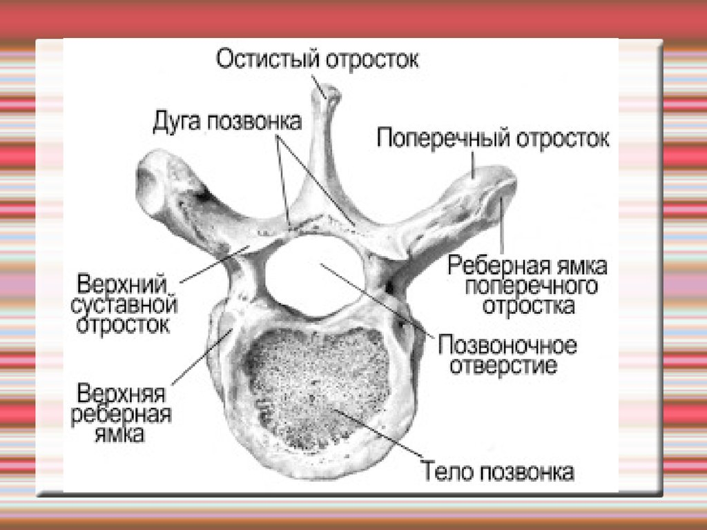 Кулаков Фёдор Давыдович  Википедия