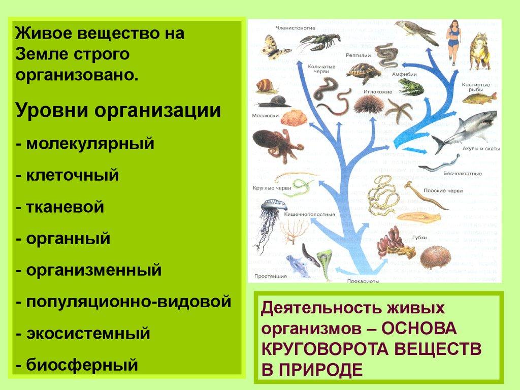 Биосфера И Ноосфера.