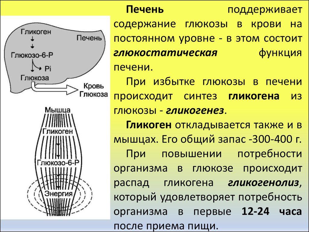 Полисахариды (крахмал, гликоген, целлюлоза, хитин