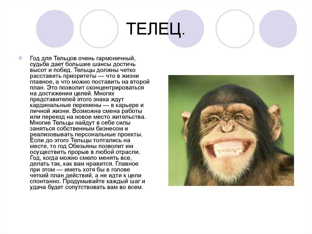 гороскоп на-2016 овнов обезьян
