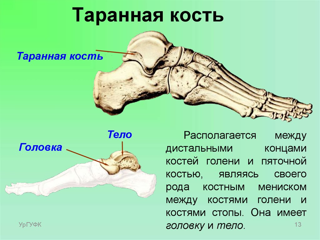 санаторное лечение артроза таранно-пяточного сустава