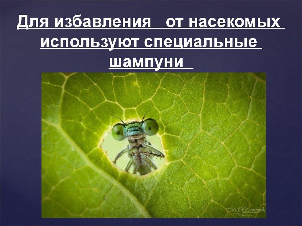 средства борьбы с паразитами в организме человека