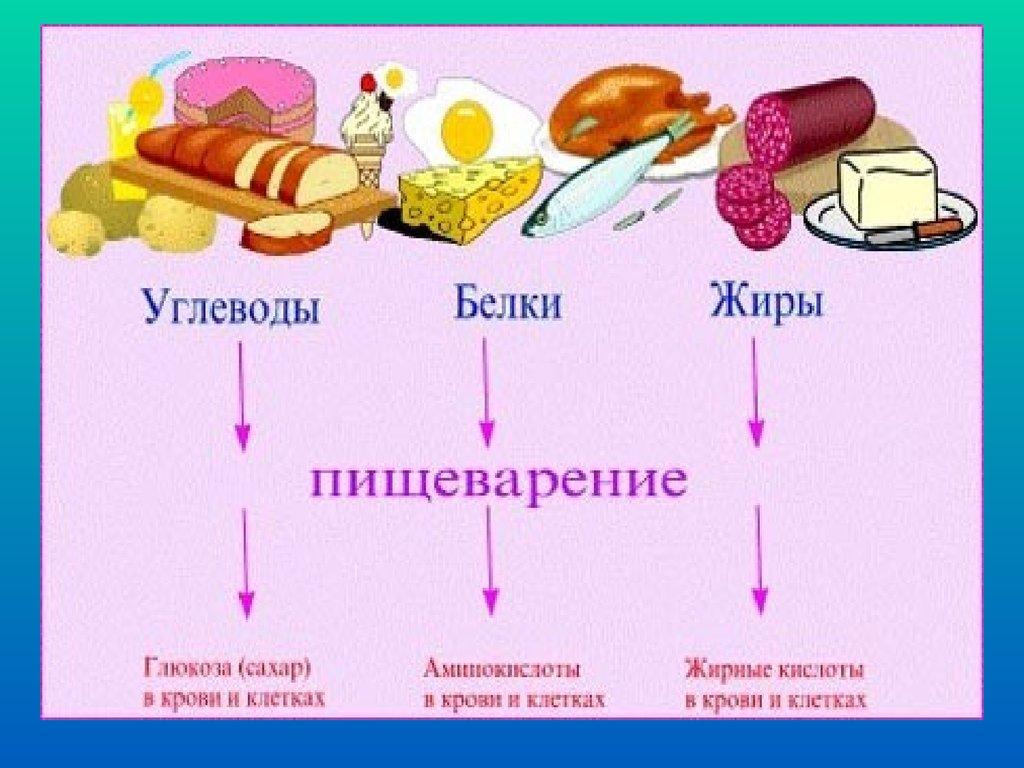 правильное и здоровое питание меню на неделю