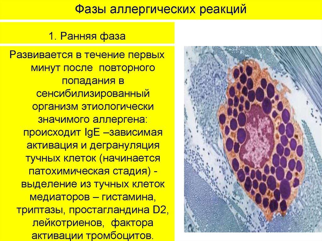 аллергические диатезы картинки