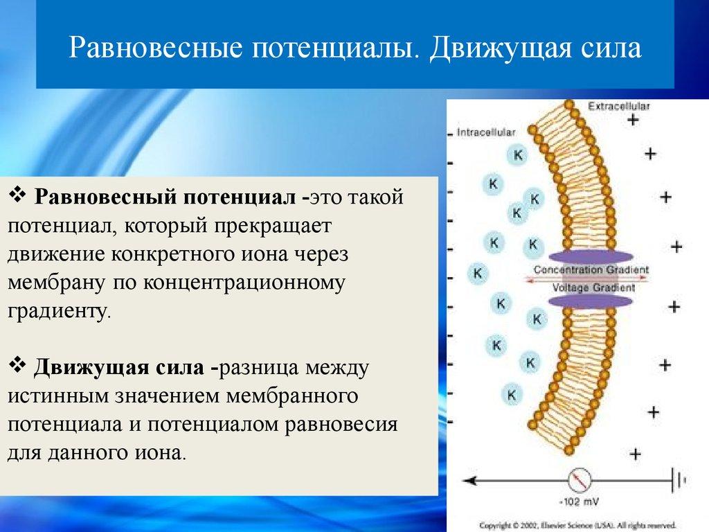 Модель клетки животного
