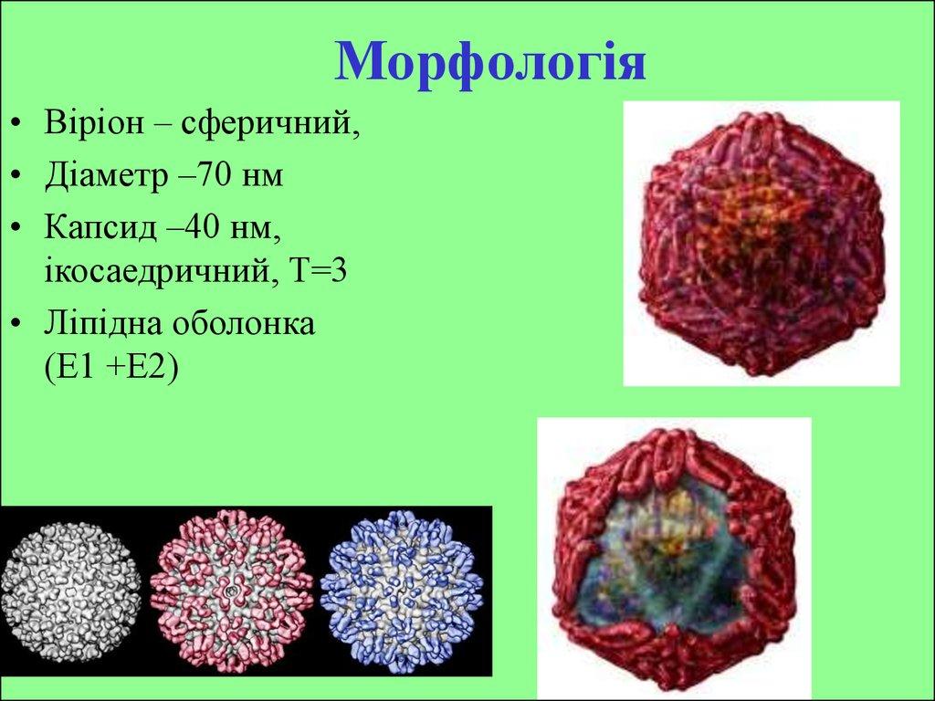 download Plant Genome Diversity Volume