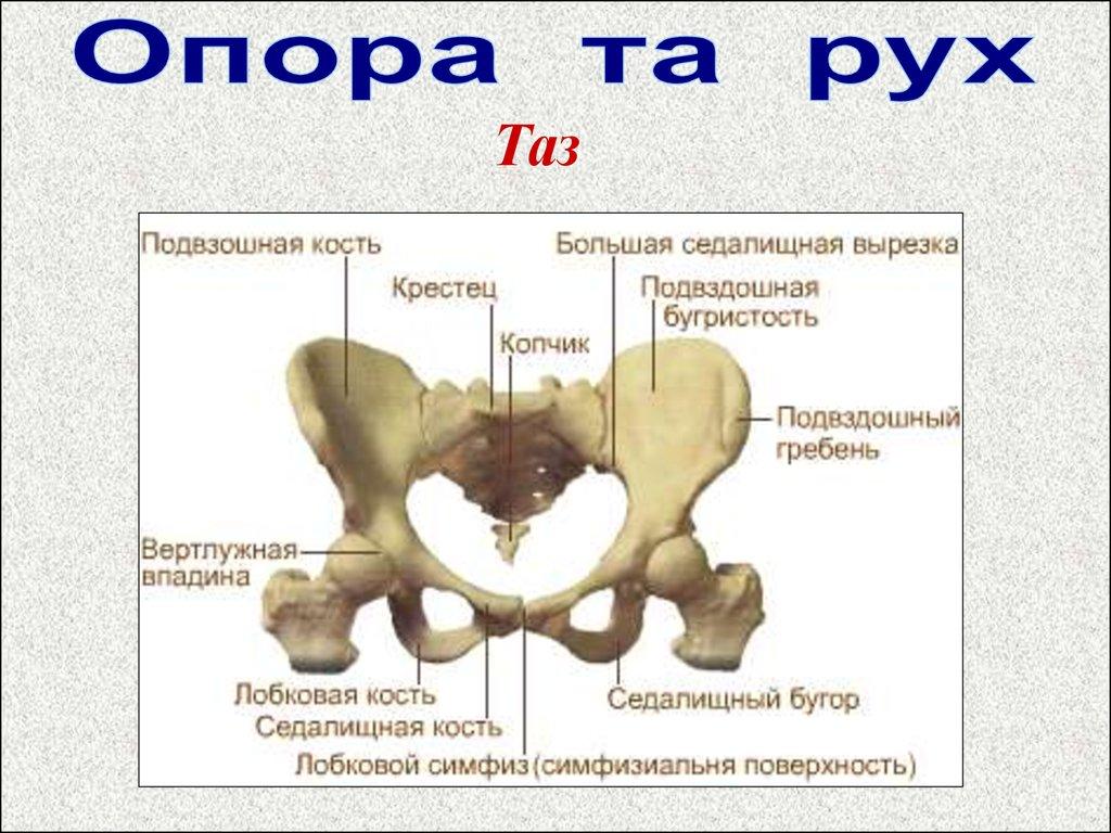 У беременной болит тазовая кость