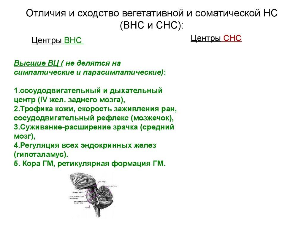 Центр Сосудодвигательный