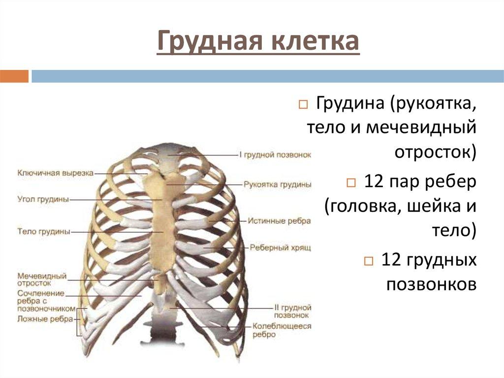болит грудина от остеохондроза