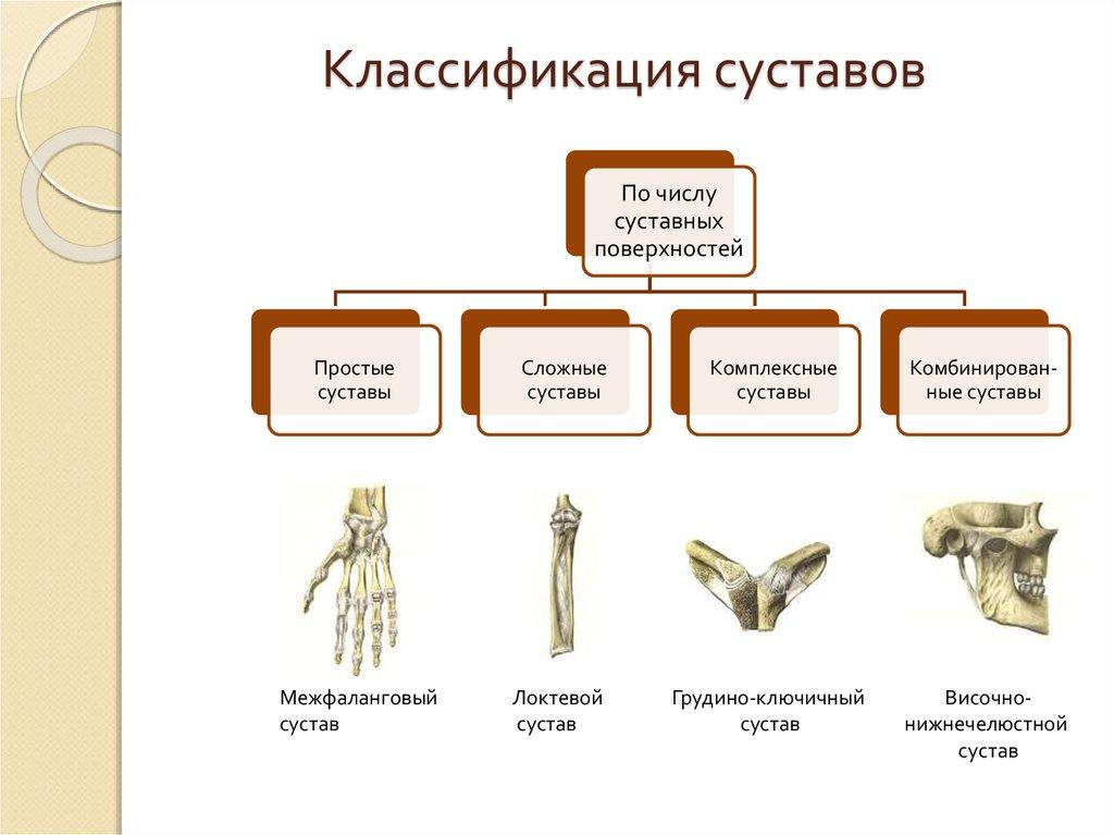 суставы строение классификация
