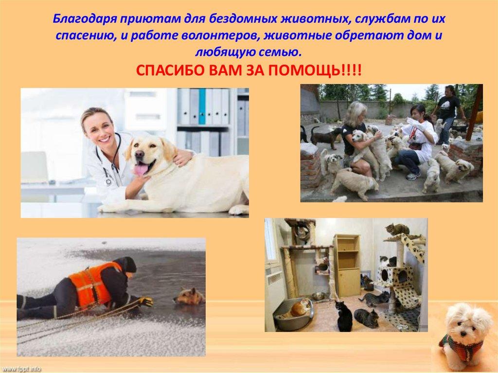 сочинение домашние животные наши друзья