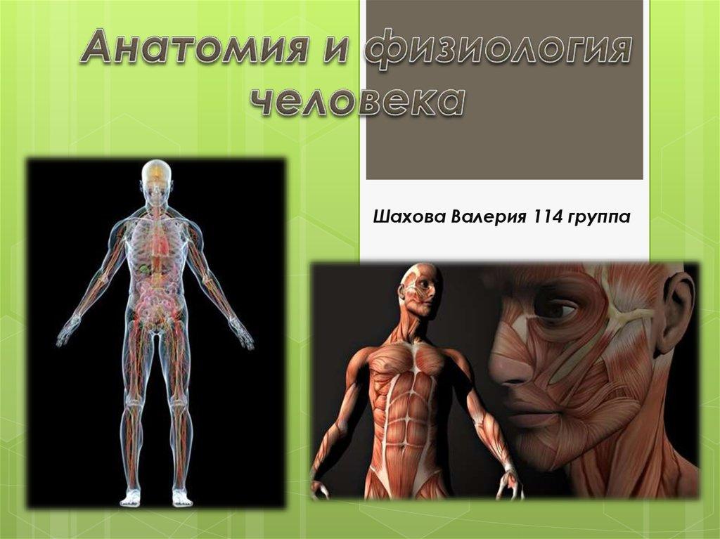 porno-gruppovuha-mnogo-muzhchin-odna-zhenshina