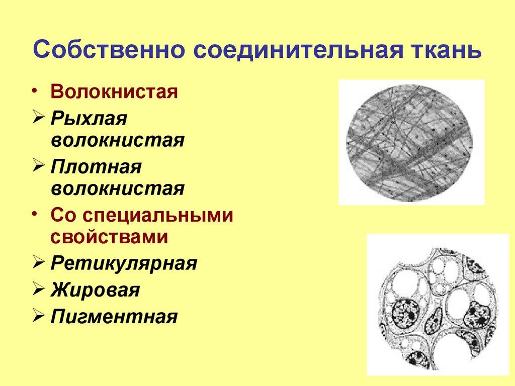 Ткань Соединительная