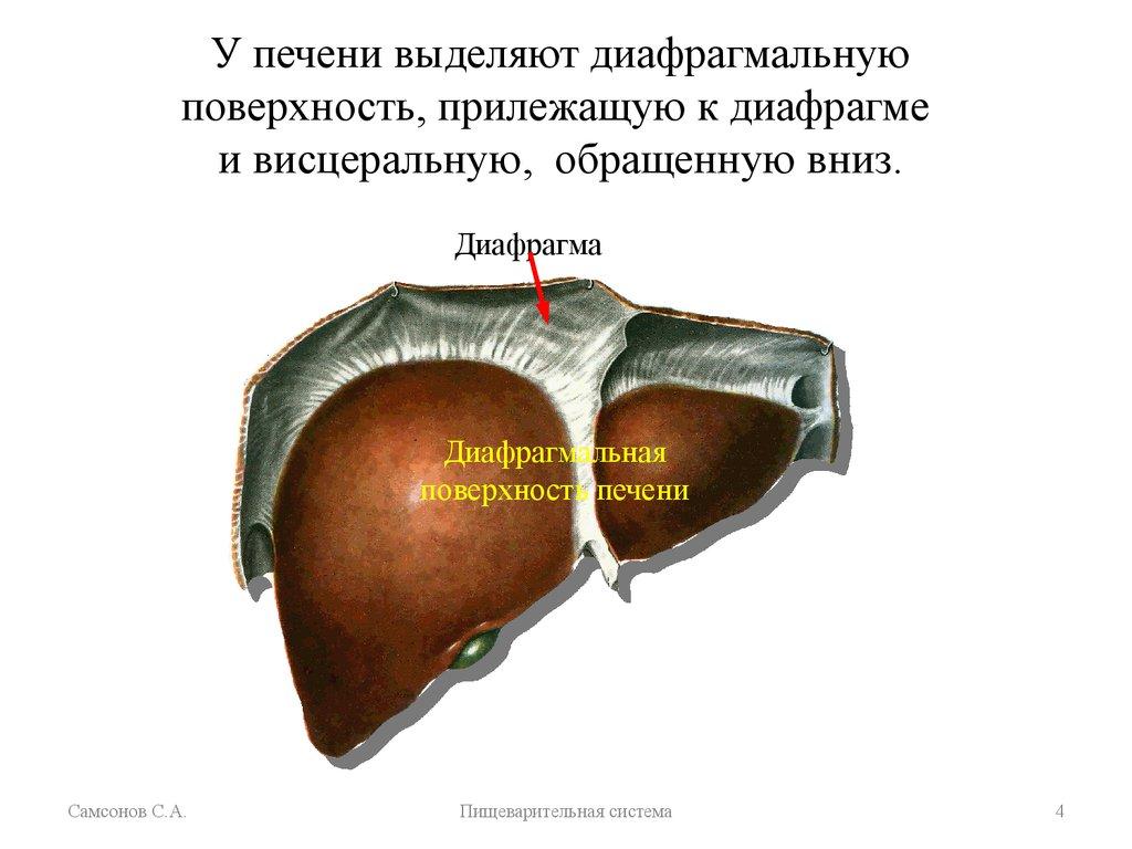 Диета при заболевании печень желчный пузырь поджелудочная железа