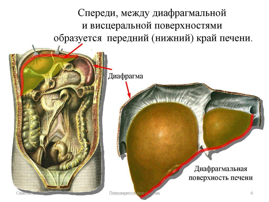 очищение малого кишечника