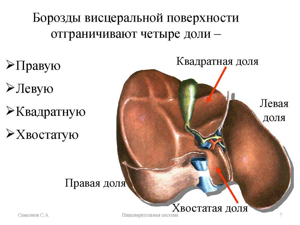 Непосредственная причина смерти при циррозе печени