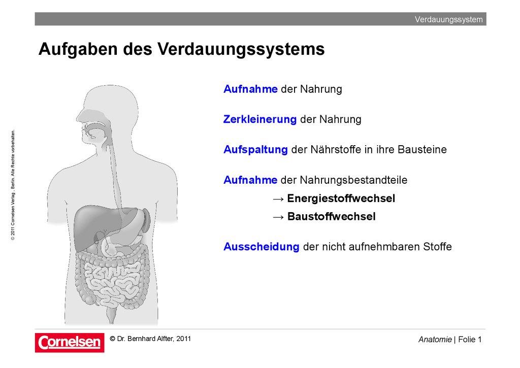Arbeitsblatt Verdauungssystem: Arbeitsblatt rinder verdauung ...