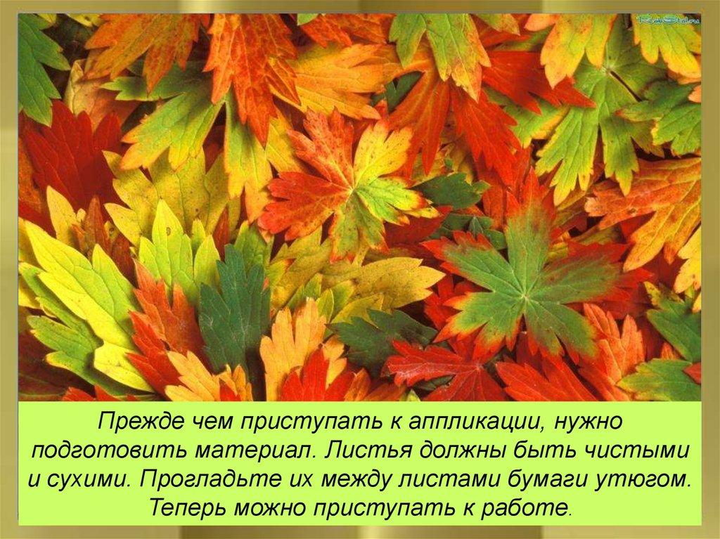Картинки веселые листочки