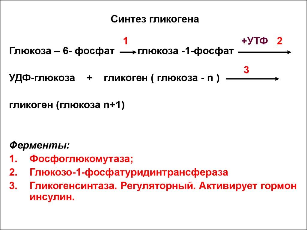 Функции белков и углеводов таблица