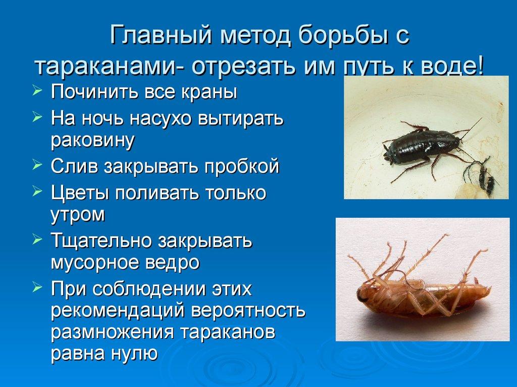 Эффективная борьба с тараканами в квартире