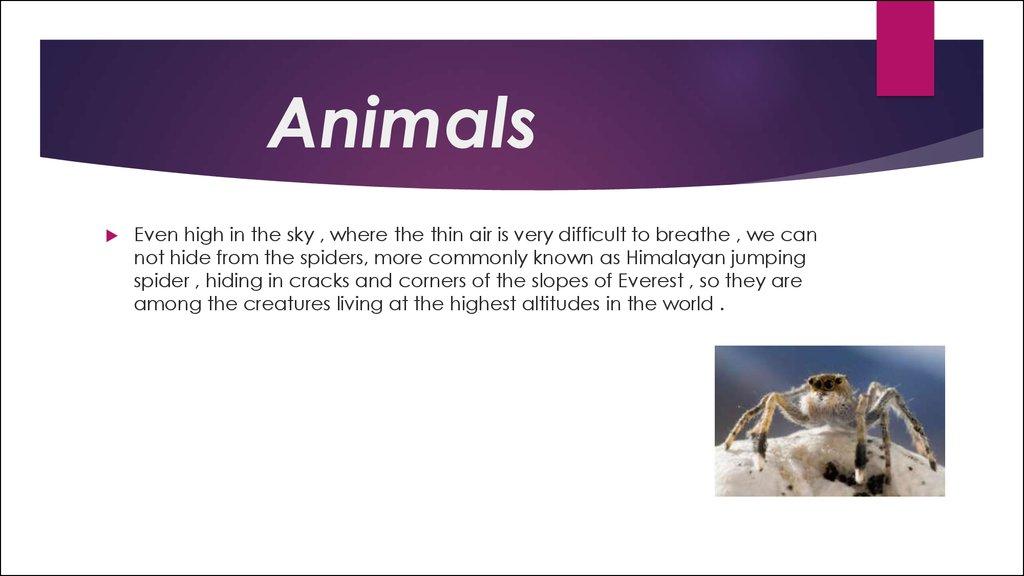 The animals презентация