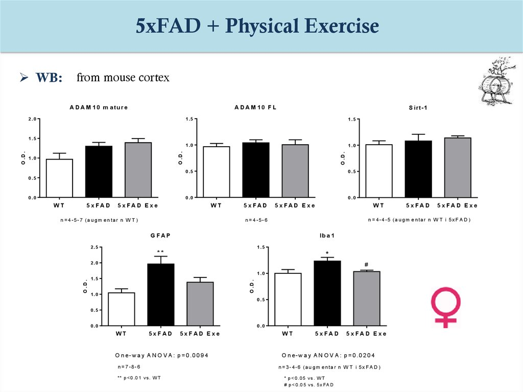 physical effects of ageing The effects of aging on sex hormone levels are more obvious in women than in men in women, most of these effects are related to menopause , when the levels of female hormones (particularly.