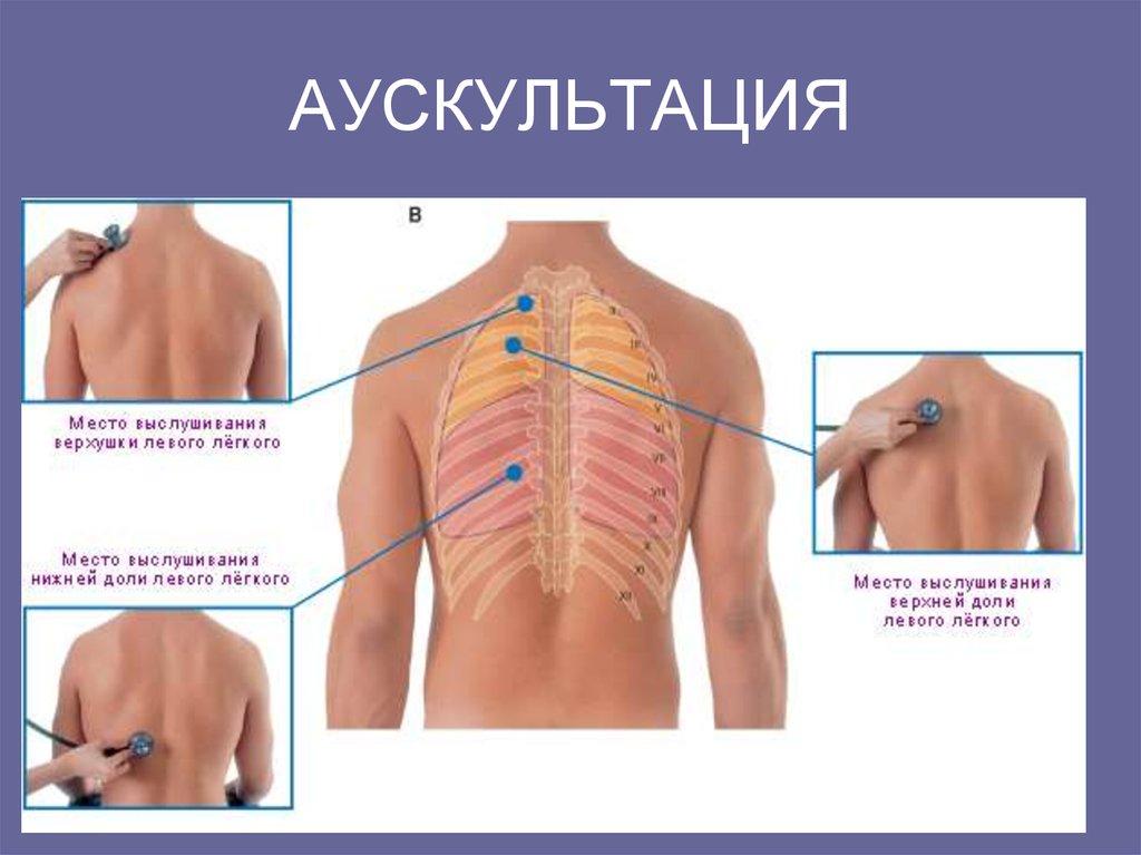 Anatomy classes online