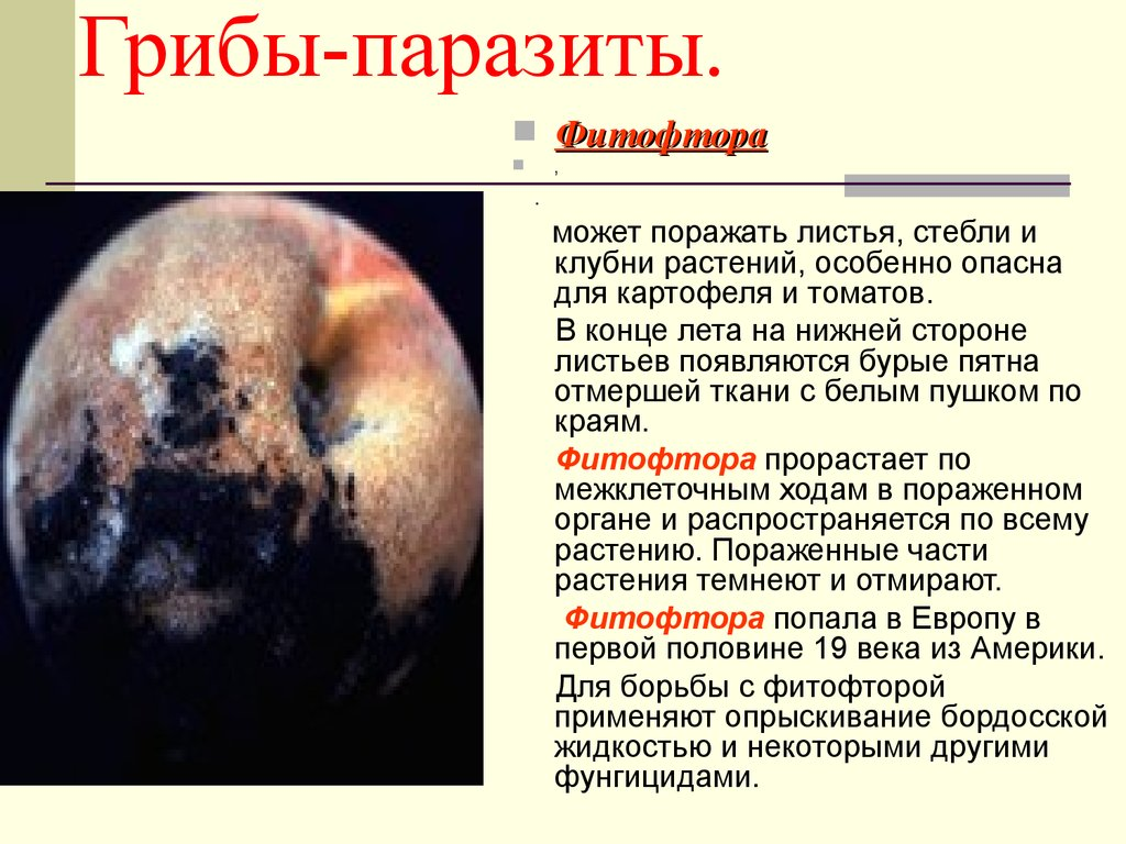 грибы паразиты человека презентация