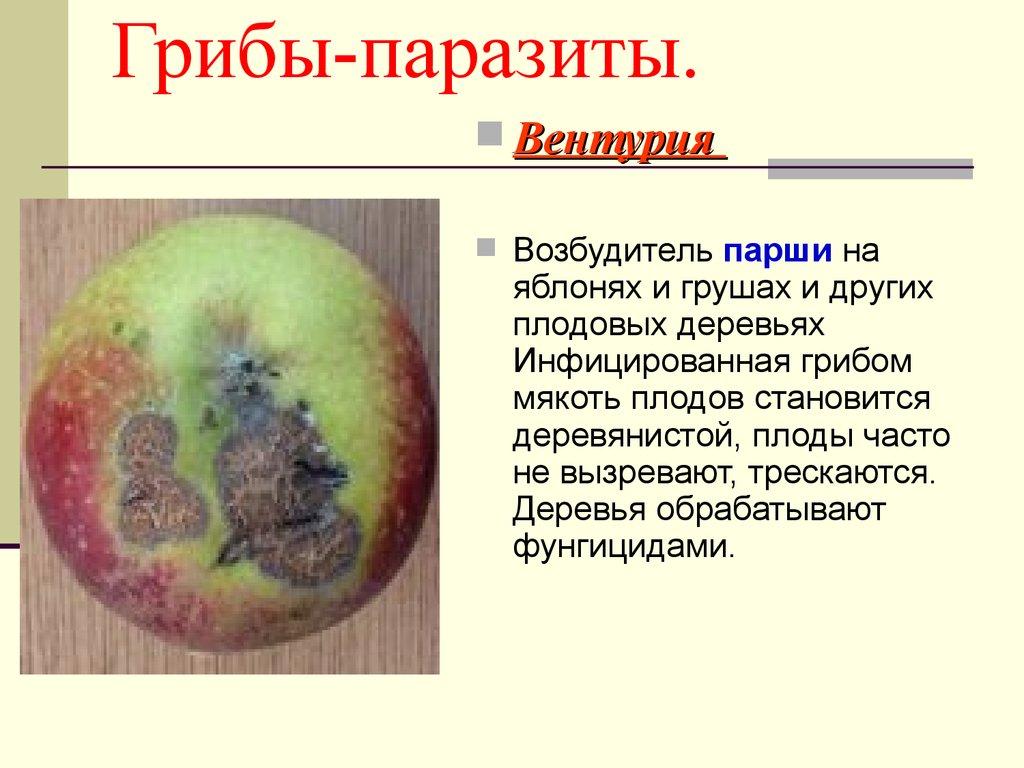 елена малышева продукты для похудения