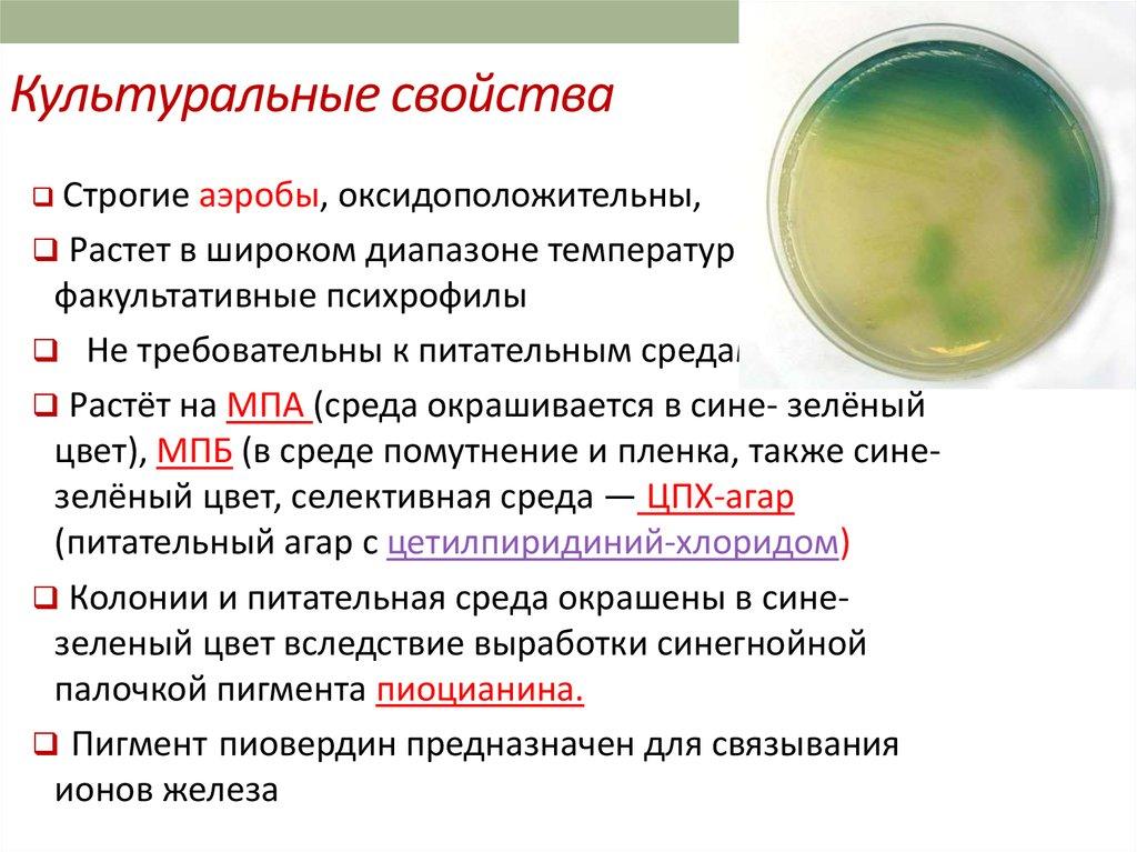 выведение паразитов из организма народными средствами