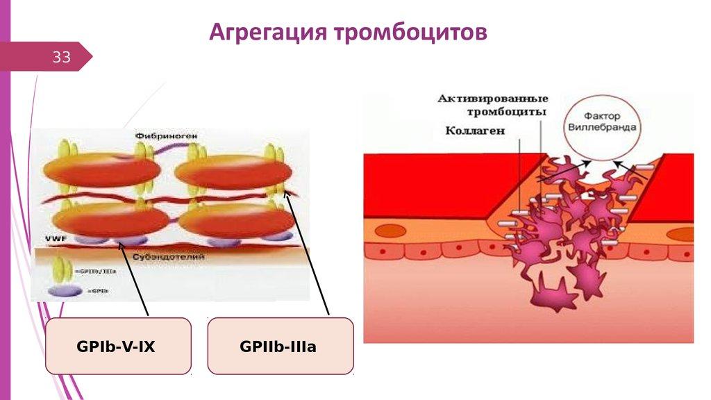 почему повышаются палочкоядерные нейтрофилы