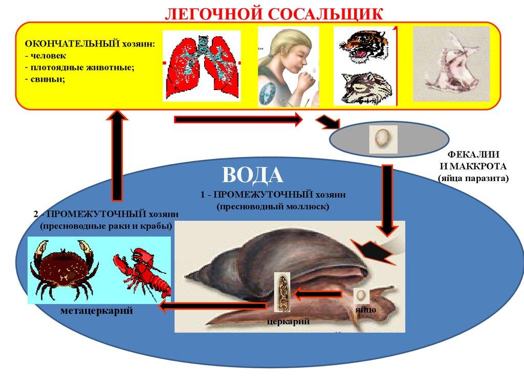русская тройчатка от паразитов своими руками отзывы