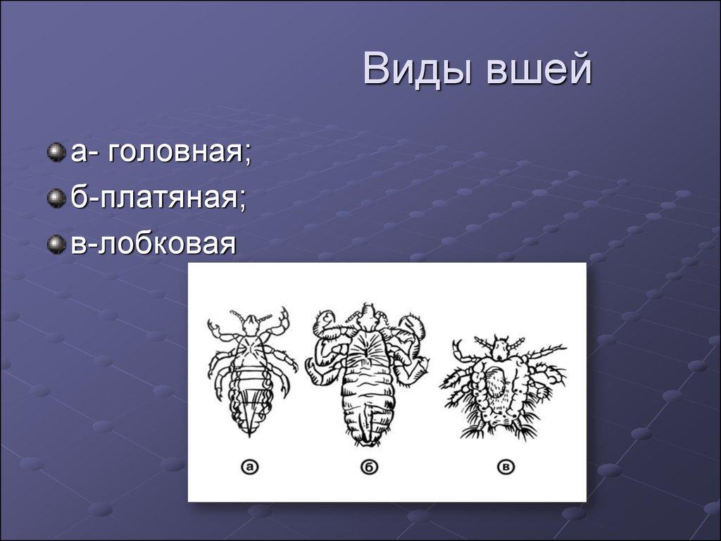 простейшие паразиты в организме человека