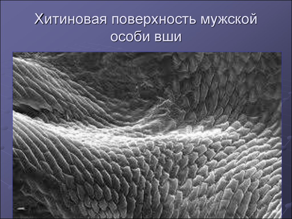 паразиты в человеке диагностика