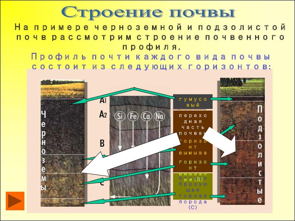 профиль дерново-подзолистых почв схема