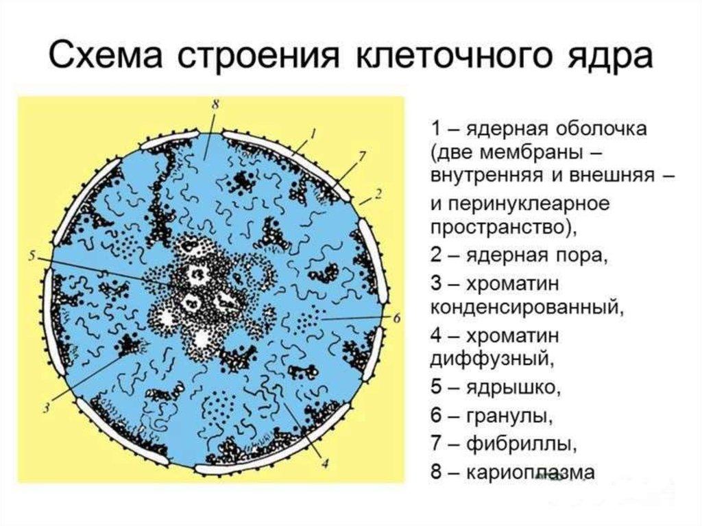 download Города России.